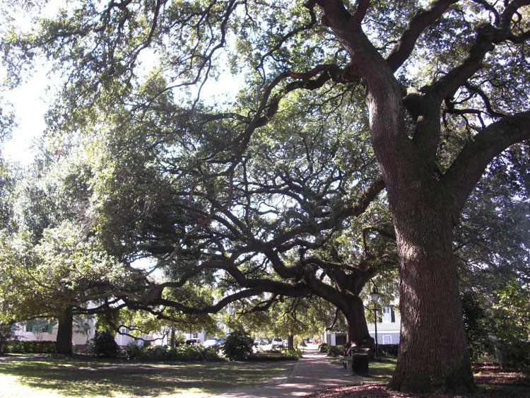 A square in Savannah, Georgia.